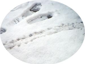 footmark.jpg