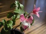 2006_1112_flower.jpg