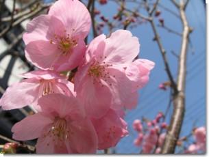 2008_spring_2.jpg