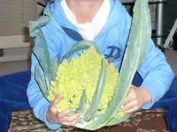 Italian_ broccoli_3.jpg