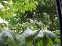 bird_2007_0710_1.jpg