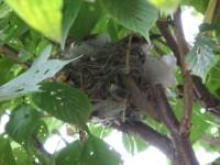 bird_2007_0710_2.jpg