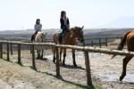kyusyu_28_horse.jpg