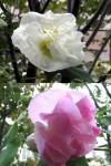 sui_huyo2006.jpg