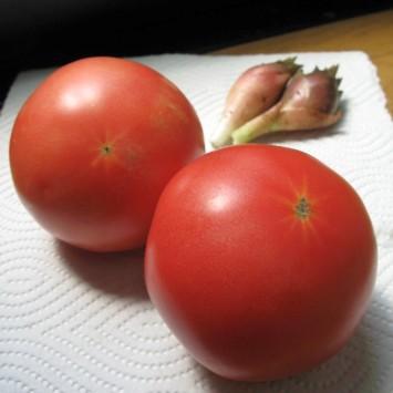 tomato2010_5.jpg