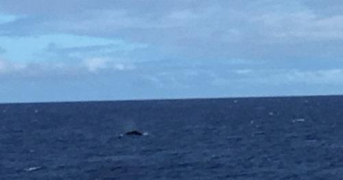 whale_last