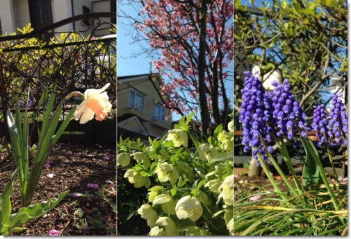 garden_2014_0405_2.jpg