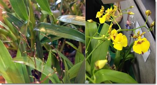 orchid2013.jpg