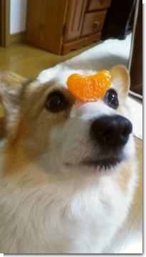 peku_orange.jpg