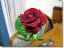 rio_rose.jpg