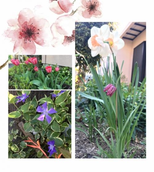 Flower_2020apr12_2